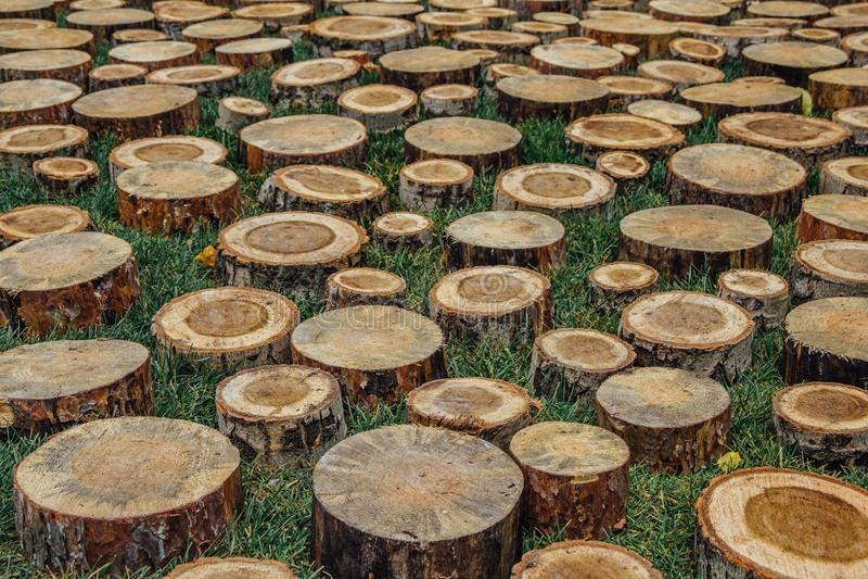 剪切树桩 免版税图库摄影