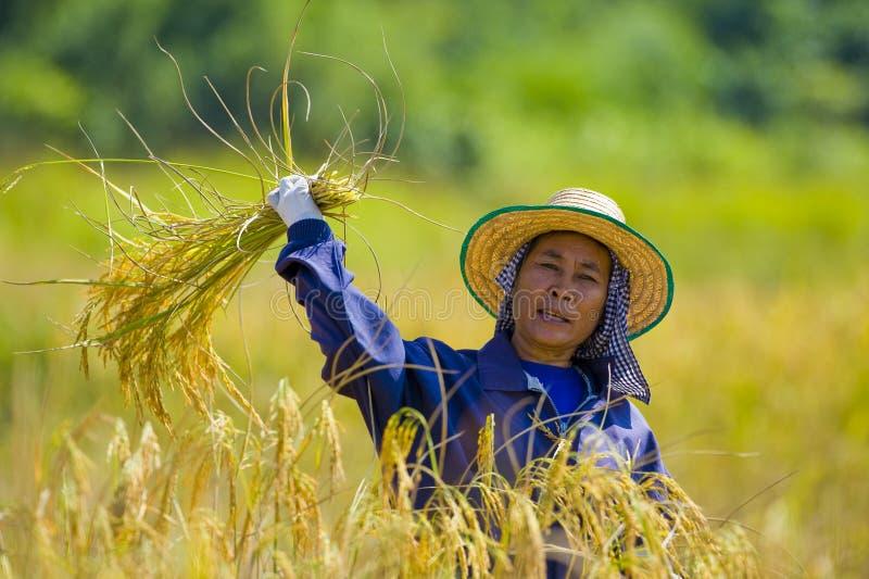 剪切米妇女 免版税库存照片
