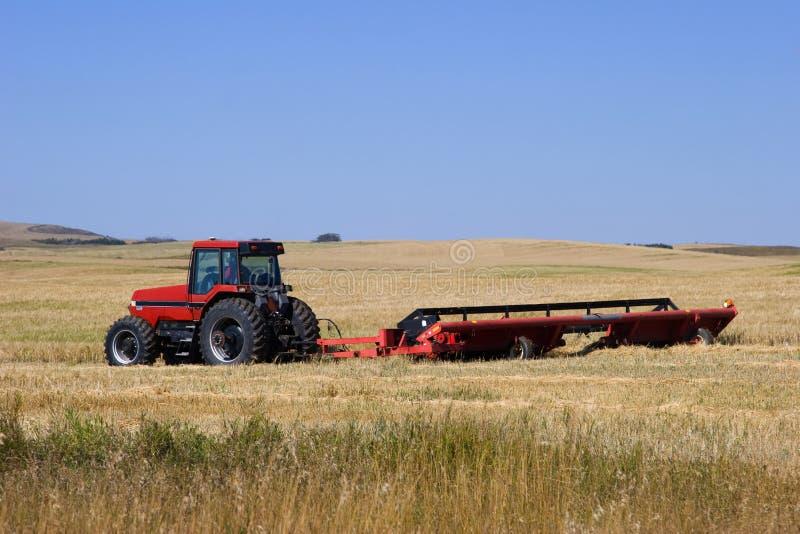 剪切麦子 免版税库存照片