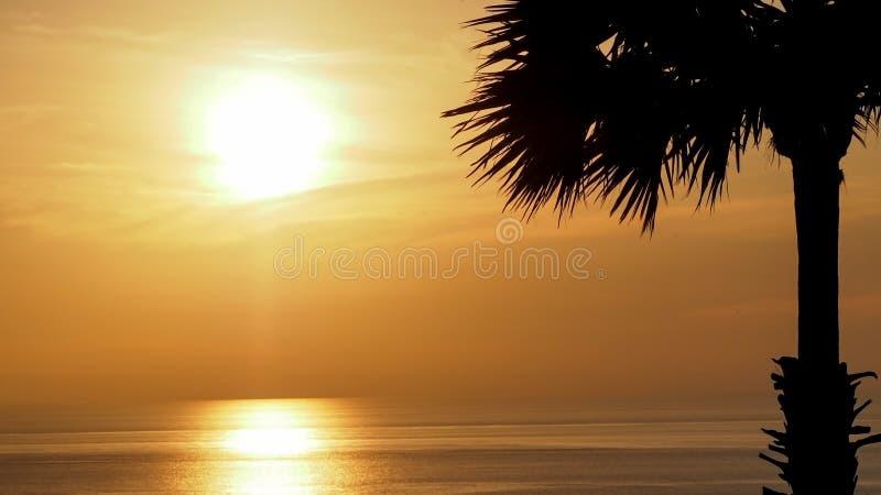 剪影与美丽的软的橙色天空的棕榈树反射海 日落在背景中 抽象橙色天空 剧烈的金黄sk 库存图片