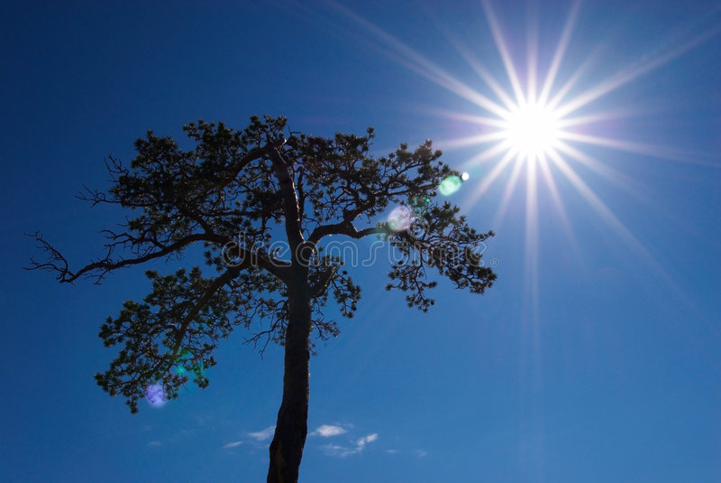 剪影光束结构树 图库摄影