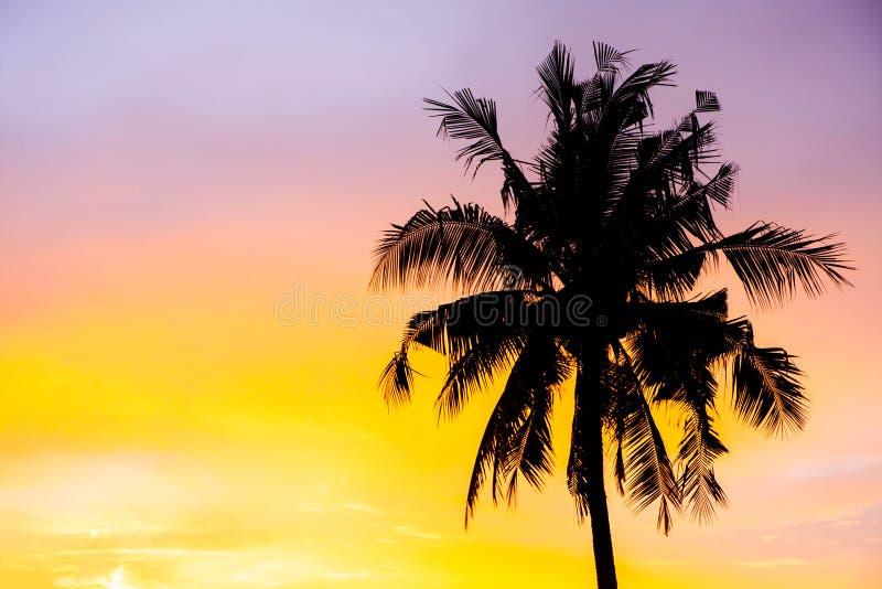剪影可可椰子树在红色天空蔚蓝日落的户外概念在海滩附近 库存照片