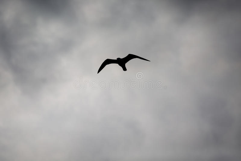 剪影在天空的鸟飞行 免版税库存图片