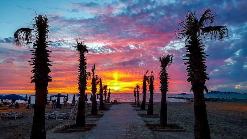 剪影在海滩的棕榈树在日落 免版税图库摄影