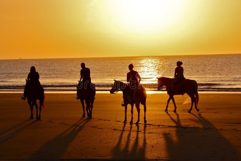 剪影在海滩的马乘驾在黎明 免版税库存照片