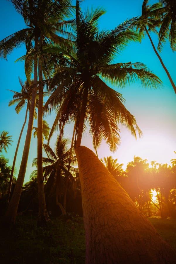 剪影在海滩附近的可可椰子树在日落 免版税库存图片