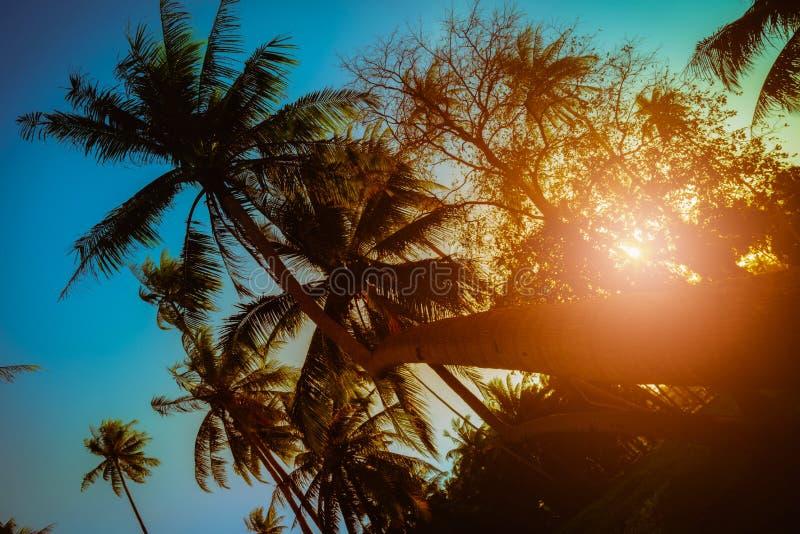 剪影在海滩附近的可可椰子树在日落 库存照片