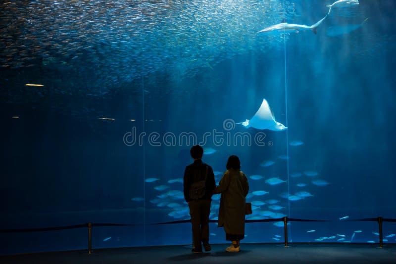 剪影夫妇看看在水族馆的鱼 免版税库存照片