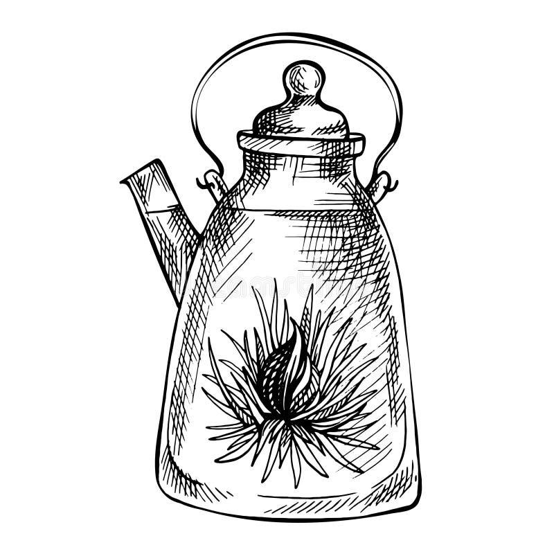 剪影手拉的茶壶 与花的开花的绿茶在玻璃茶壶 异乎寻常的开花的茶 库存例证