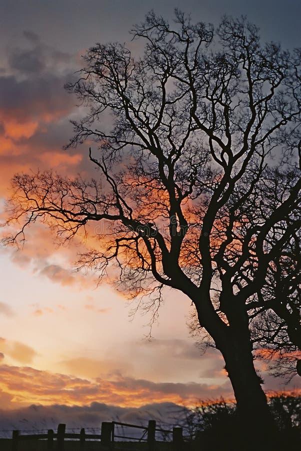 剪影日出结构树 免版税图库摄影