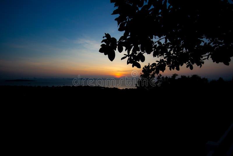 剪影树和海有日落的 树现出轮廓反对s 库存照片