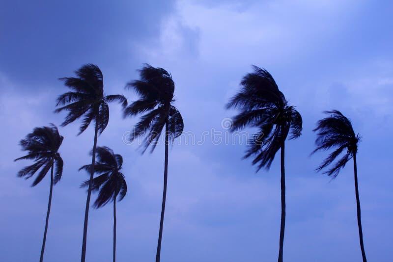 剪影棕榈树 免版税库存图片