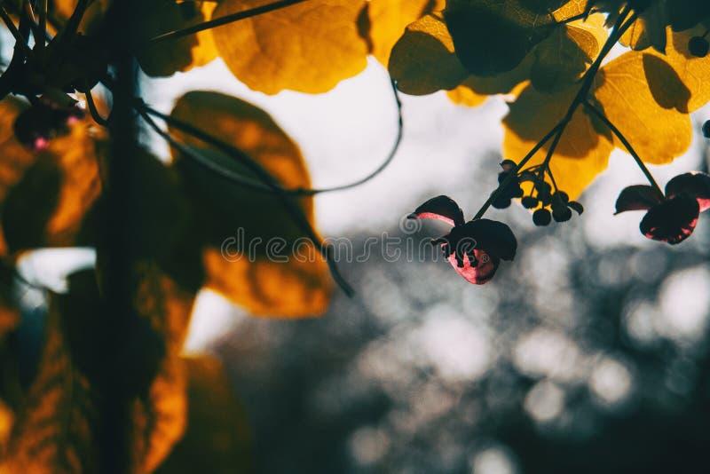 剪影特写镜头在花的日落的 图库摄影