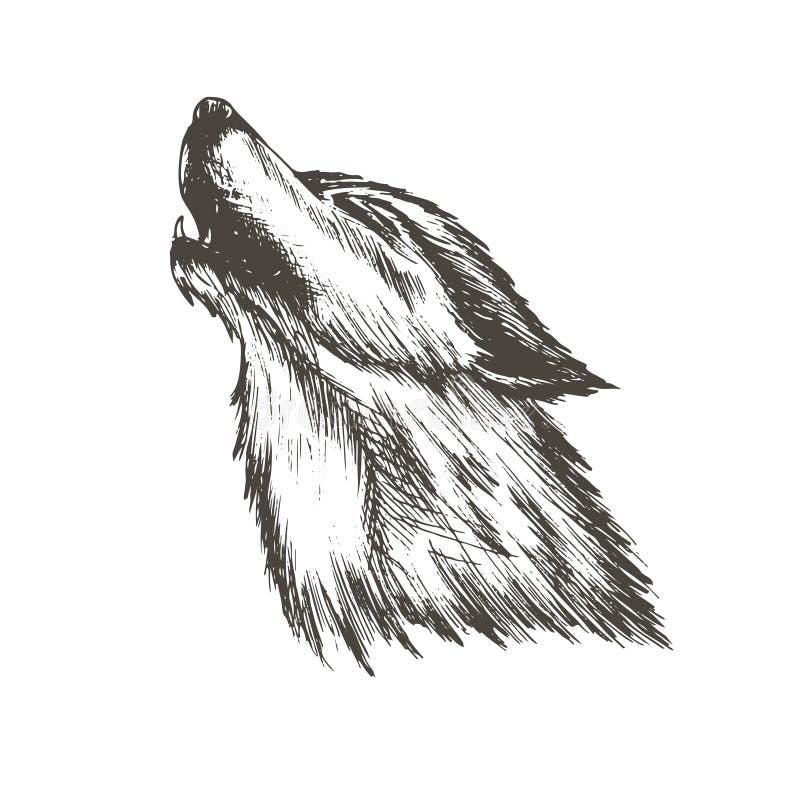 剪影狼的传染媒介例证 免版税库存图片