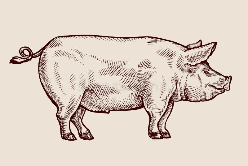 剪影猪 手拉的传染媒介例证 库存例证