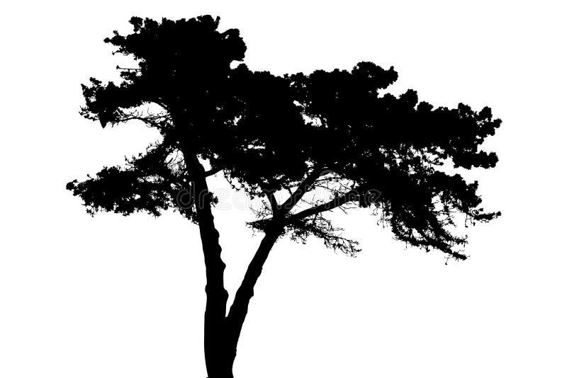 剪影结构树 皇族释放例证
