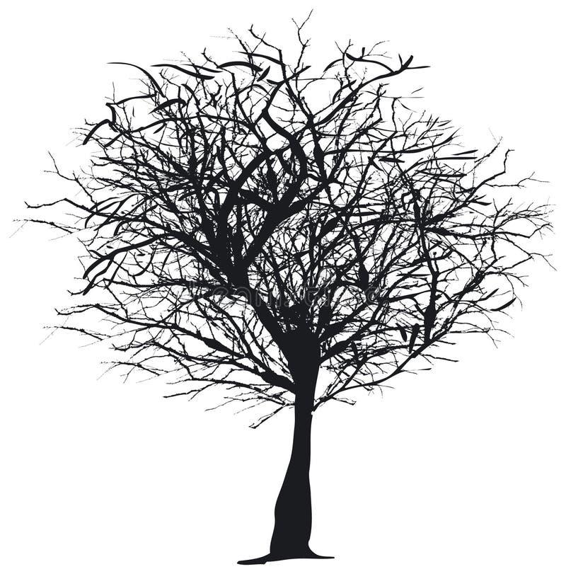 剪影结构树 免版税库存照片