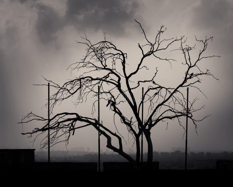 剪影被射击与多云天空的一棵唯一树在开罗,埃及城堡  库存图片