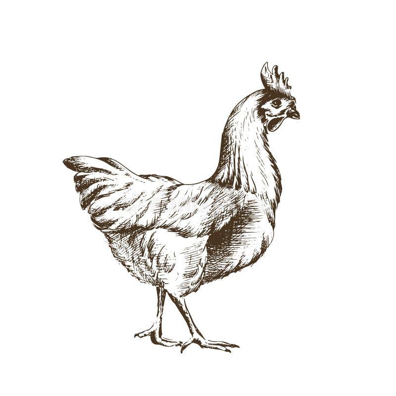 剪影鸡的传染媒介例证 库存图片