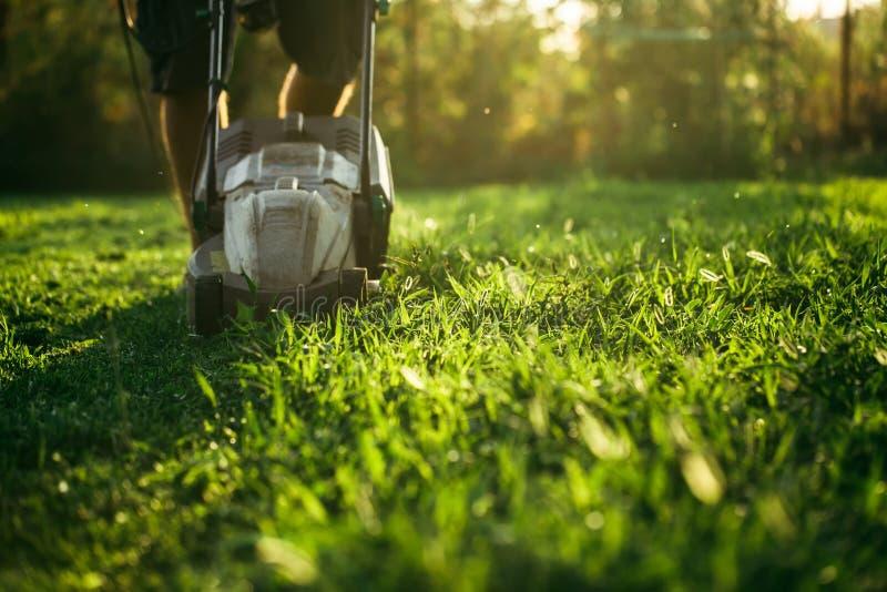 剪绿草的割草机在后院 背景从事园艺 库存照片
