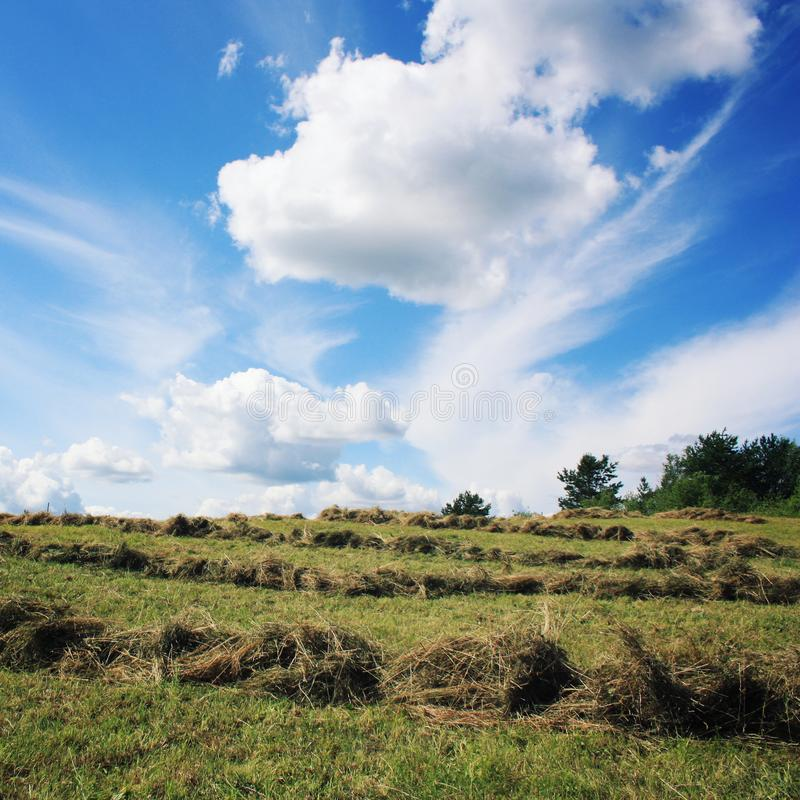 割晒牧草 晴朗日的夏天 国家领域 库存照片