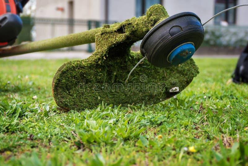 割草机/灌木清除机整理的长满的草 库存照片