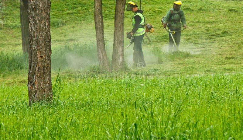 割草的一个小组浅绿色的制服的公开市政工作者和面具在有手扶的汽油割草机的一个公园  图库摄影