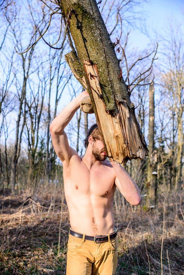力量和残酷 供以人员收集在森林伐木工人或樵夫性感赤裸的残酷坚强的可爱的人木头 免版税库存照片