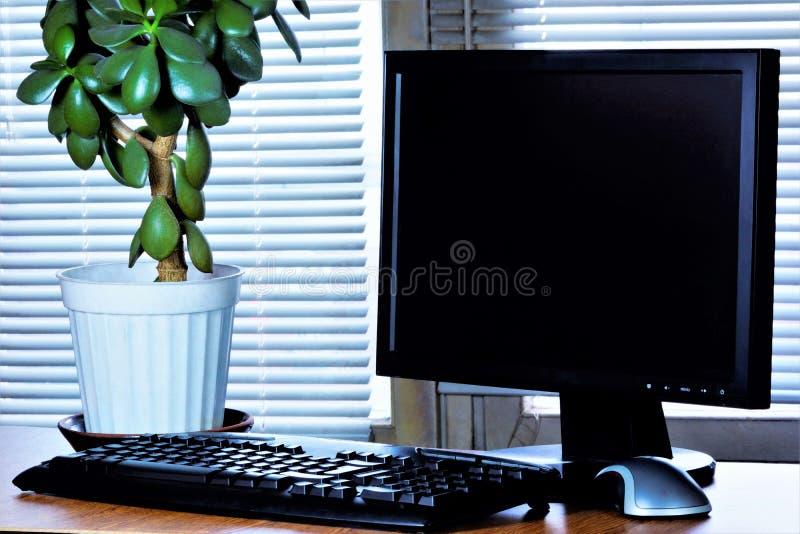 办公桌-计算机显示器,键盘,老鼠,金钱树,窗帘 必要的辅助部件经理-键入的键盘, 免版税库存照片
