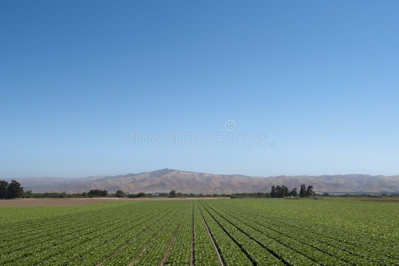 加利福尼亚农厂场面 免版税库存照片