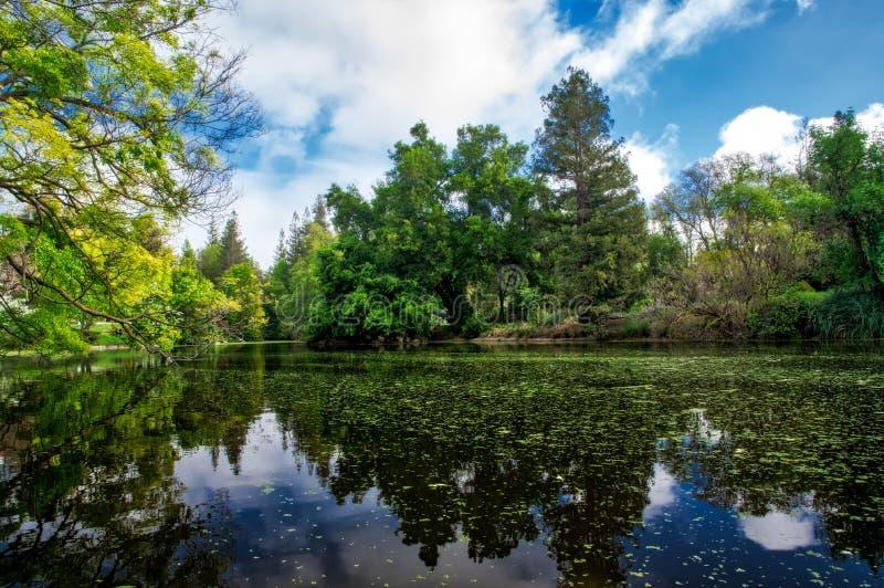 加利福尼亚大学戴维斯分校有树和池塘的树木园庭院 库存照片