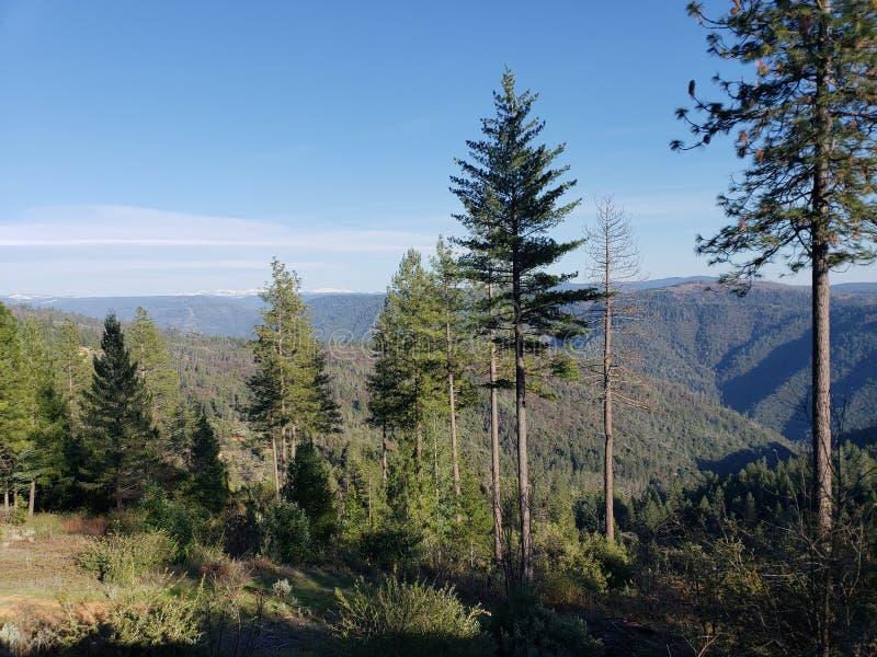 加利福尼亚山树 免版税库存照片