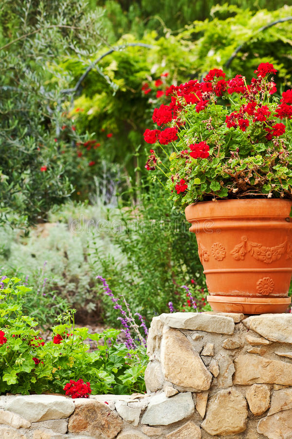 加利福尼亚庭院多年生植物 免版税库存照片