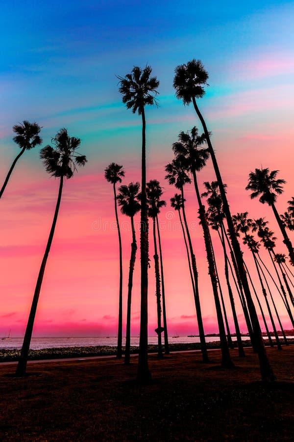 加利福尼亚日落棕榈树行在圣塔巴巴拉 免版税库存图片