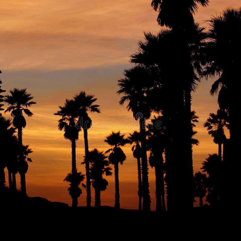 加利福尼亚日落 免版税图库摄影