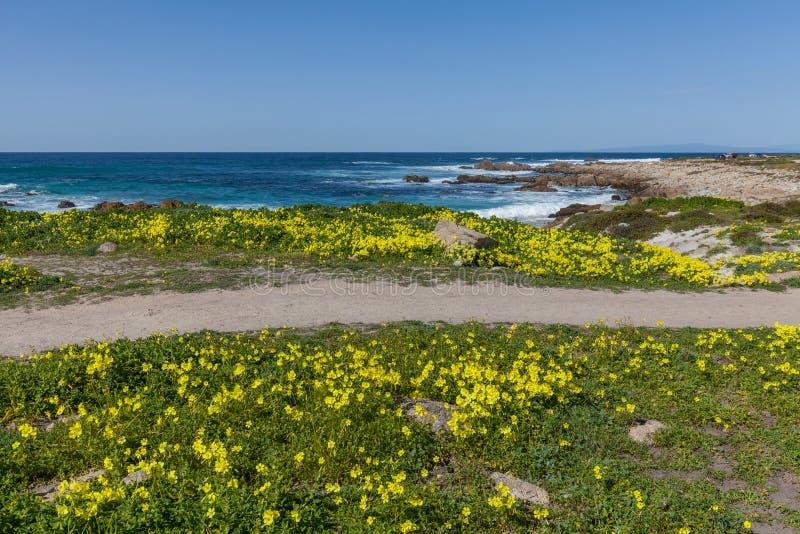 加利福尼亚海岸和野花 库存图片