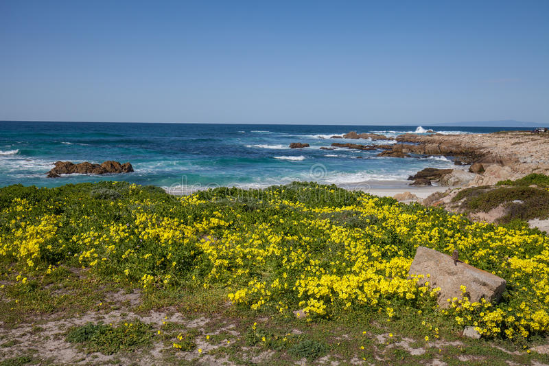 加利福尼亚海岸风景和野花 免版税库存照片