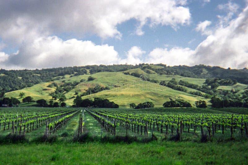 加利福尼亚葡萄园和绵延山在背景中 库存照片