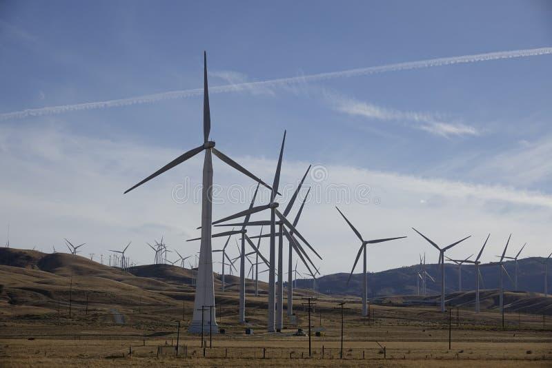 加利福尼亚风车  库存图片