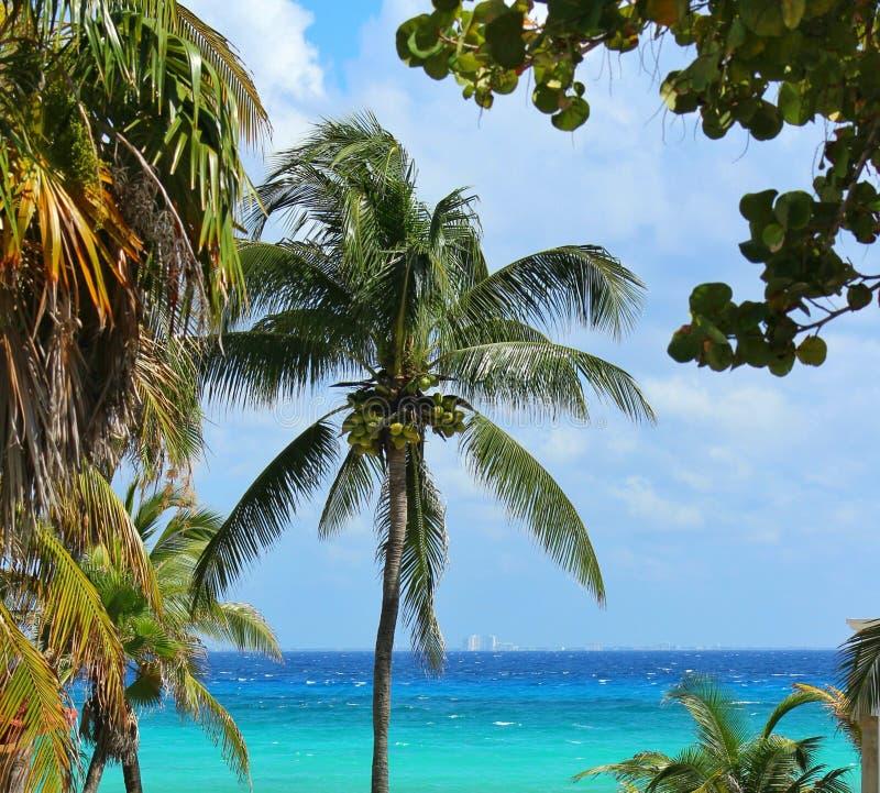 加勒比在海滨del卡门 图库摄影