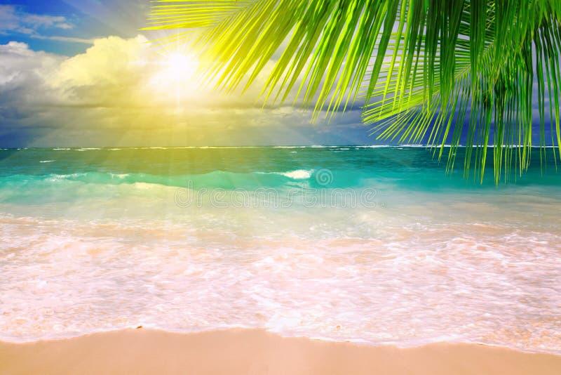 加勒比梦想海滩和棕榈叶。 免版税图库摄影