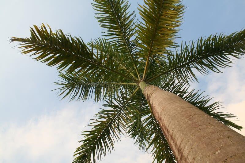 加勒比棕榈树 免版税库存图片