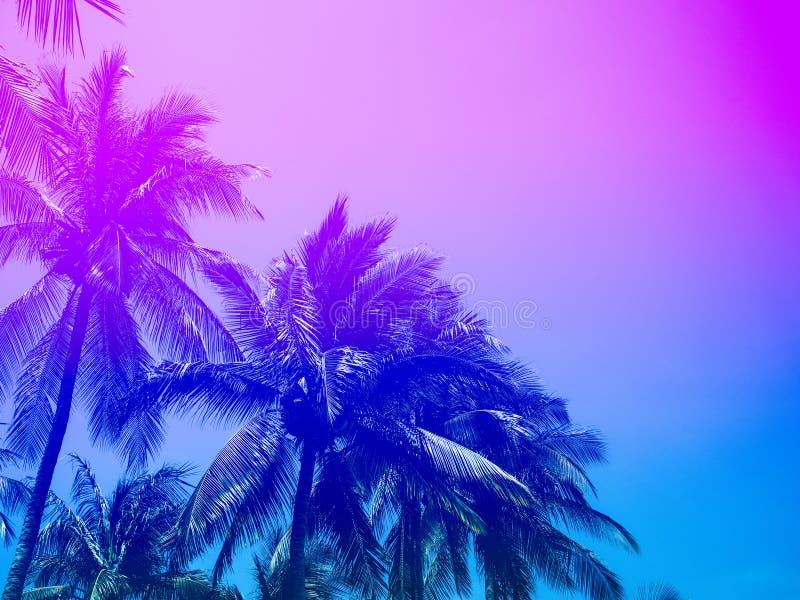 加勒比椰子古巴棕榈树 图库摄影