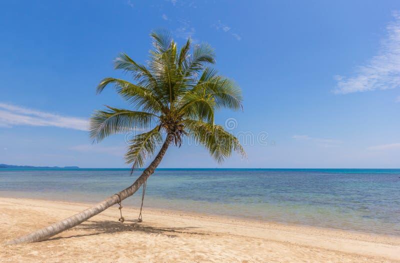 加勒比椰子古巴棕榈树 库存照片