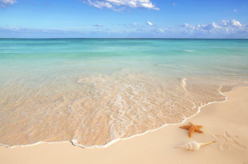 加勒比沙子海运轰击海星绿松石 免版税库存图片