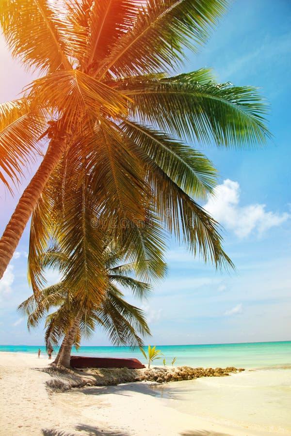 加勒比海的风景有说谎在棕榈树下的小船的在图象的左边 太阳的光芒通过Th发光 免版税库存图片