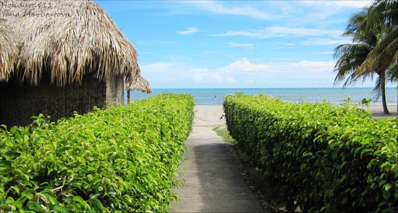 加勒比海,对海滩的方式,与蓝天和水晶水和绿草和棕榈的海滩视图 库存照片