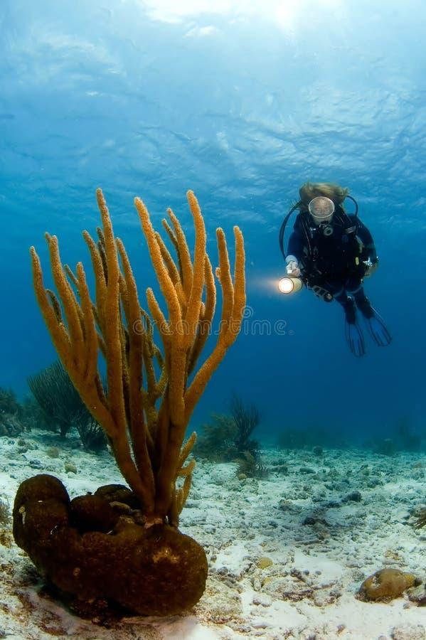 加勒比珊瑚潜水员轻的指向的软的妇&# 库存图片