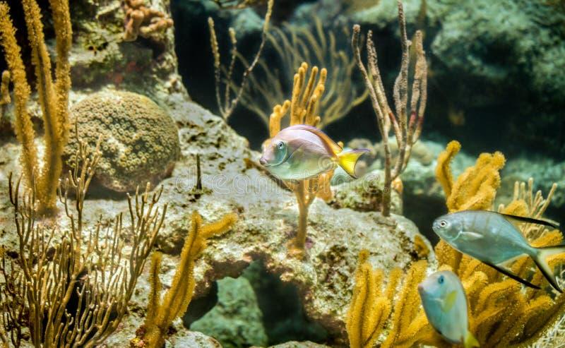 加勒比礁石 库存照片