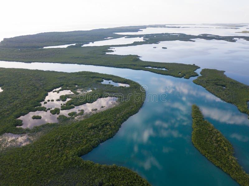 加勒比美洲红树和镇静盐水湖天线  图库摄影